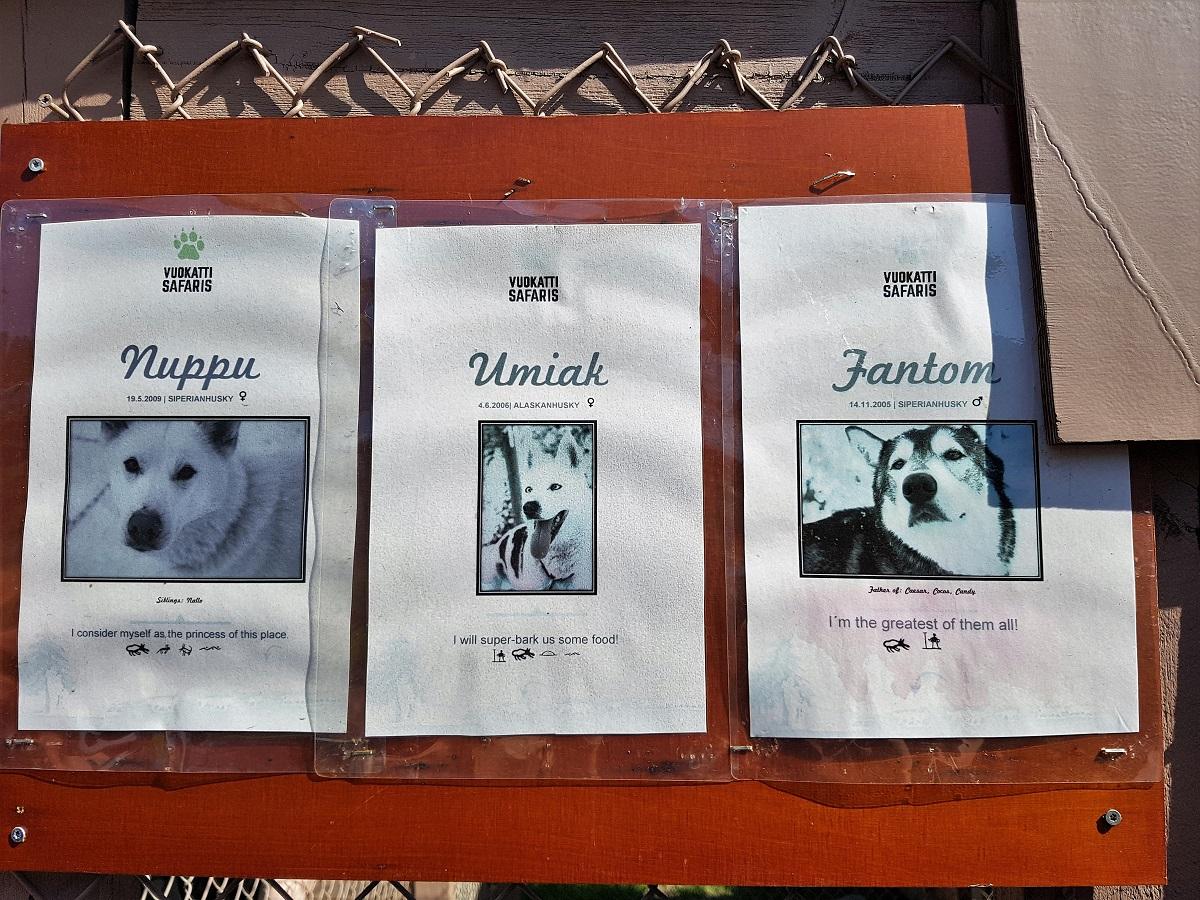 Husky excursie in Vuokatti Finland