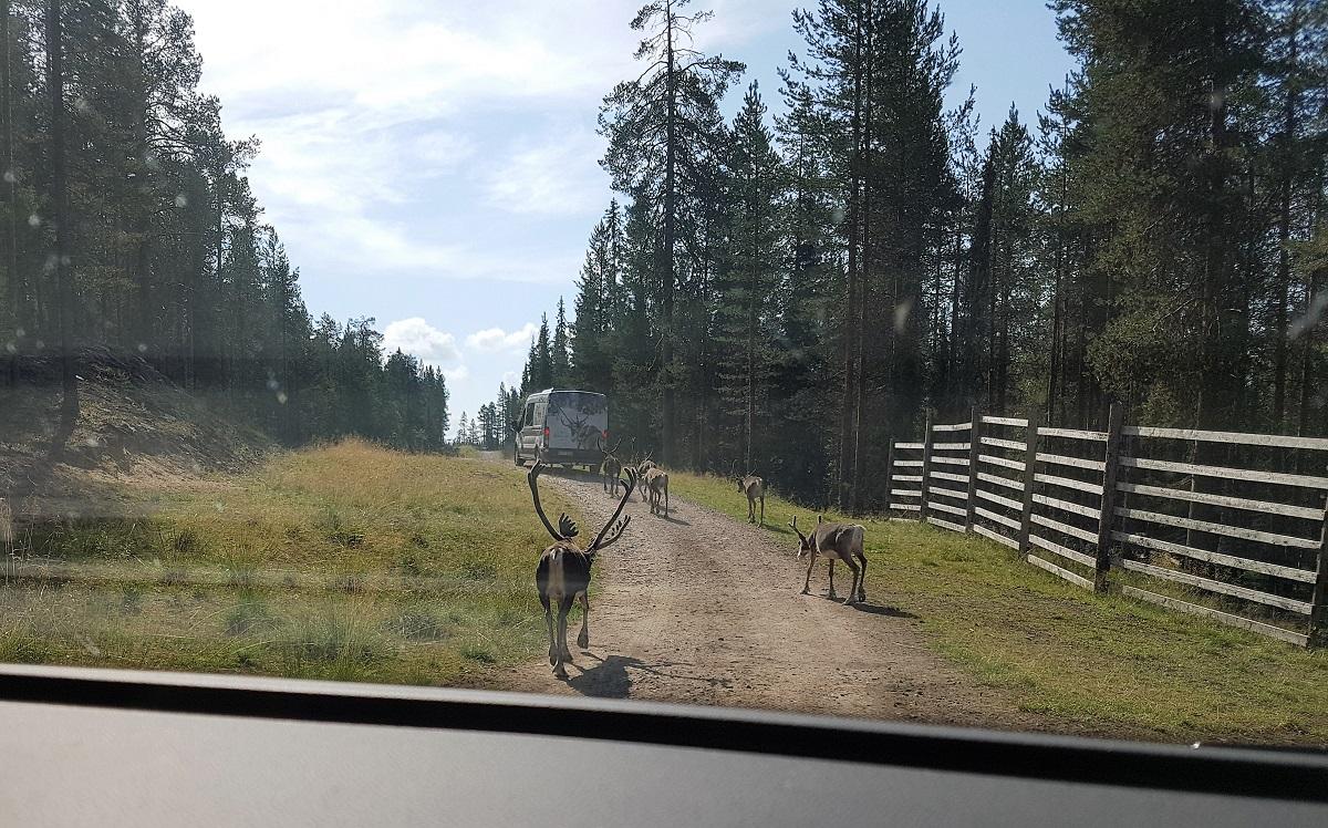 rendierpark Salla Finland