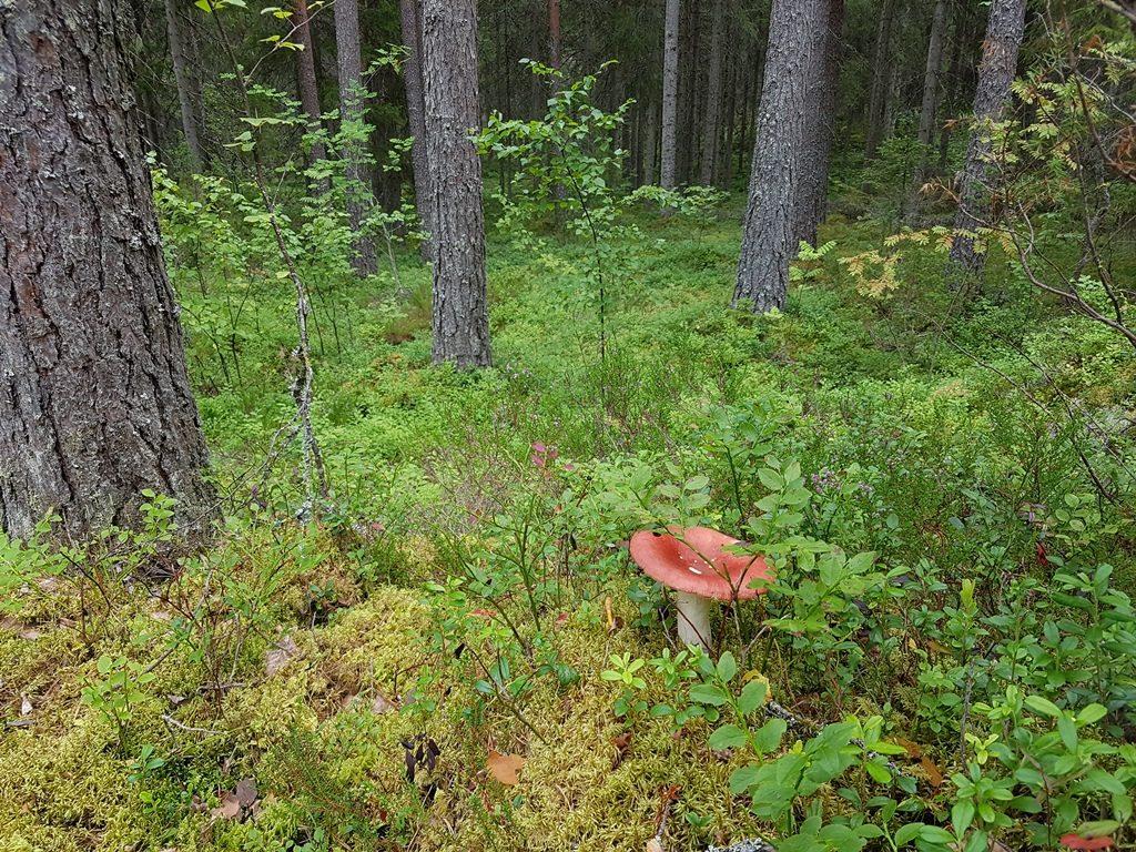 Nationaal Park Helvetinjarvi bij Tampere